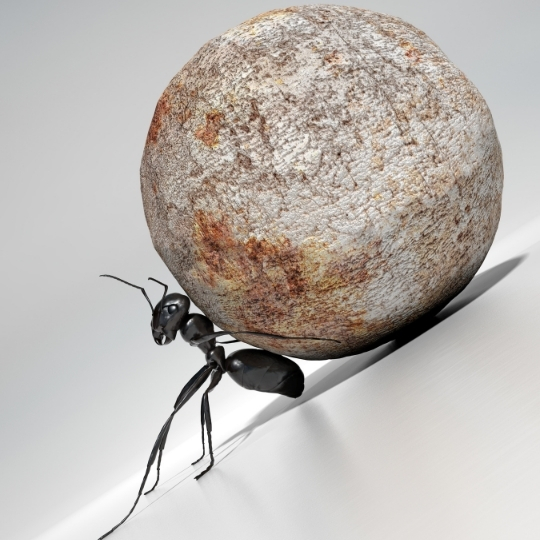 Determined ant.